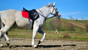 Verzekering paard | kantoor JSD Heylen